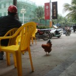 My favourite photo from Hainan. It's a chicken, wandering the floor of a cafe.